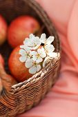 picture of apple blossom  - Wicker basket light brown on a pink background with red,ripe,juicy apples and a sprig of blossoming white Apple tree ** Note: Shallow depth of field - JPG