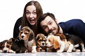 stock photo of puppy beagle  - The happy man woman and big group of a beagle puppies on white background - JPG
