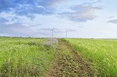 picture of generator  - Landscape of green barley field and wind generator with blue cloudy sky in Gapado Island of Jeju Island in Korea - JPG