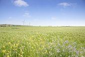 pic of generator  - Landscape of green barley field and wind generator with blue cloudy sky in Gapado Island of Jeju Island in Korea - JPG