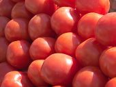 stock photo of stall  - Red tomatoes on a market stall in the sunlight - JPG