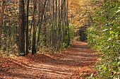 Forest pathway in Autumn