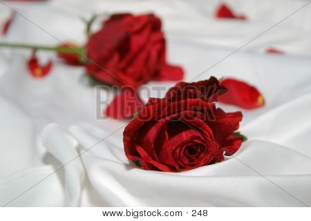 Roses On Silk poster