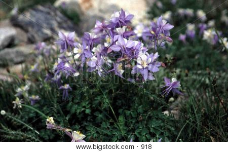 Mountian Tundra Flowers poster